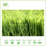 Poudre de jus d'herbe d'orge de qualité