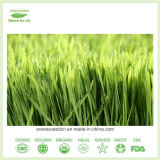 Самый лучший продавая порошок травы ячменя 100% естественный зеленый