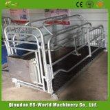 Qualitäts-Schwein-Schwangerschaft oder begrenzter Rahmen-Stall