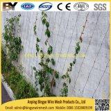 Das flexible Edelstahl Webnet Seil-Kabel X-Neigen Landschaftsgreening-lebendes Grünpflanze-kletterndes Stützwand-Systems-Ineinander greifen