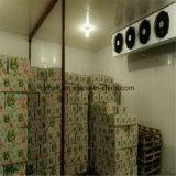 Cámara fría, conservación en cámara frigorífica, refrigerador para la fruta y carne
