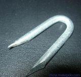 電流を通された金属Uの塀の芝地のステープルの釘