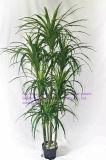 Migliori piante artificiali di vendita del Yucca Gu-Mx08092008