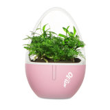 자연적인 향수의, 긍정 및 부정 이온을%s 가진 탁상용 작은 정원 공기 청정제