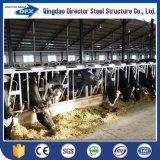Niedrige Kosten-strukturelles Herstellungs-Schwein-/Kuh-Geflügelfarm-Stahlhaus