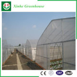 Serra della pellicola di agricoltura per le verdure/giardino