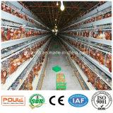 Cages de poulet d'aviculture Euqipment et incubateur d'oeufs de couche