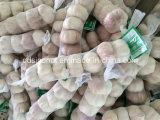 Nova temporada de alho fresco Chinês Branco Normal & Branco puro
