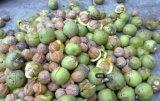 Le bon goût de noix biologiques