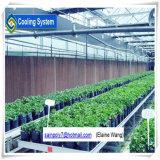 Serra nutriente del sistema di coltura idroponica della pellicola di Nft