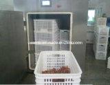 Vegetable und Fruit Fresh Vacuum Cooler halten