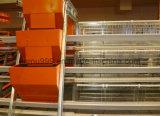 Faible prix de l'équipement d'élevage de poulet en maison de la volaille (JFW-08)