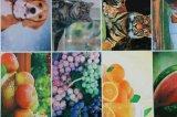 6 machine d'impression flexographique tissée de sac des graines de couleur par pp