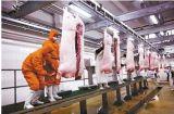 Профессиональное оборудование свиньи цыплятины изготовления с Ce