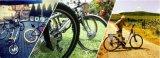 자전거를 위한 민첩한 36V 250W 전기 자전거 변환 장비