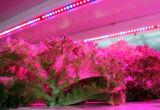 LED de alta qualidade da luz de crescer com LED T8 crescer o alojamento da luz para as plantas crescendo