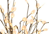 أشعل ضوء خاصّ بالأزهار [ويلّوو تر] في لفاف بيضاء مع ضوء