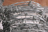 Bwg16 определяют электрическую колючую проволоку Galvanzied (фабрика Anping)