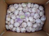 2018 neues Getreide-erstklassige Qualitätschinesen Garlics
