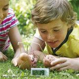 Proyecto verde de la ciencia de la escuela en casa de juguete DIY Kit experimento de reloj de la patata