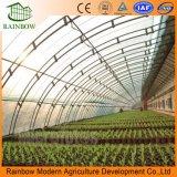 판매를 위한 경제적인 열대 농업 태양 온실