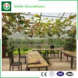 Casa verde do jardim da alta qualidade/conservatório da casa verde/quarto de Sun/Gazebo de vidro