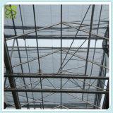 Hydroponic 시스템 열대 토마토 녹색 집