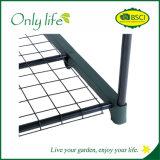 소형 온실이 Onlylife 경제적인 3개의 층에 의하여 녹색이 된다