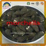 GMP Factory Hot Sell Secar Morel Champignons Morchella