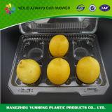 Еды упаковки любимчика контейнер плодоовощ материальной прозрачной квадратной пластичный