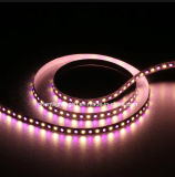 UL 5050 2835 Max23 24V IP20 LED RGBW Strip Light