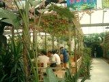 Piante di alta qualità e fiori artificiali del giardino verticale GU102213608