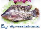 De In het groot Tilapia van de Visserij Prijs van uitstekende kwaliteit