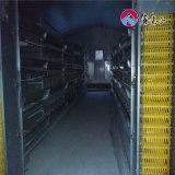 Tipo explorações avícolas da maquinaria H do sistema automático da camada da gaiola da galinha