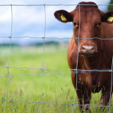 Rete fissa animale galvanizzata azienda agricola utilizzata/rete fissa del ferro (Factory&Exporter)