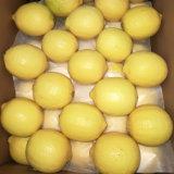 Carnes frescas de gradação chinesa um limão