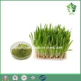 自然なWheatgrassのエキスの4:1 ~10: 1、Anti-Aging