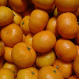 Golde Fornecedor de Sweet Baby Mandarin