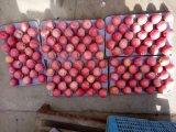 Qinguan Apple/frischer Apple mit Qualität