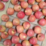 Superiore di Qinguan rosso fresco cinese Apple