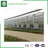 Serre chaude horticole en verre Anti-UV pour horticulture
