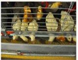 Пауль Tech Автоматическая H Тип рамы куриное мясо птицы и Pullet отсека для оборудования для малых цыплят