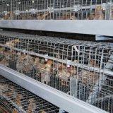 Het automatische Systeem van de Kooi van de Kip van de Jonge kip van het Kuiken van de Batterij