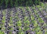 Tapis de pont en caoutchouc, l'herbe tapis en caoutchouc, Pathways tapis en caoutchouc (GM0404)