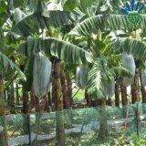 Agricultura Nonwoven Saco da banana