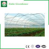 Landwirtschafts-Plastik-/Film-Gewächshaus/grünes Haus/Gewächshäuser für Verkauf