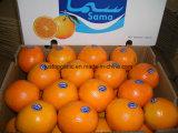 O mandarino chinês/laranja frescos do umbigo (48/56/64/72/80/88/100)