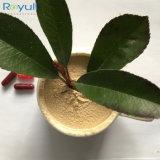 Extracto orgánico de calidad superior 15%UV de la raíz del Ginseng