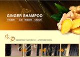 El jengibre alimenta el champú Bioaqua del pelo mejora champú de la caspa de la calidad del pelo