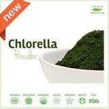 Хлорелла протеина высокого качества 65%